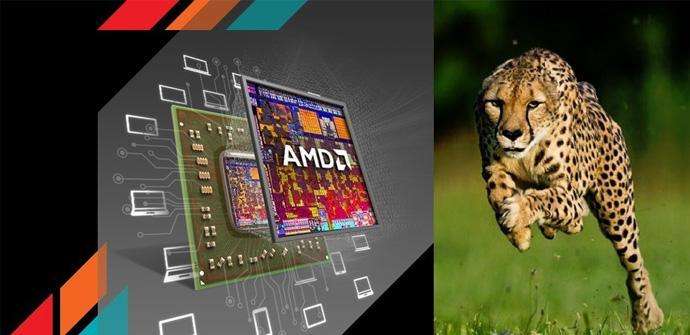 AMD Nolan